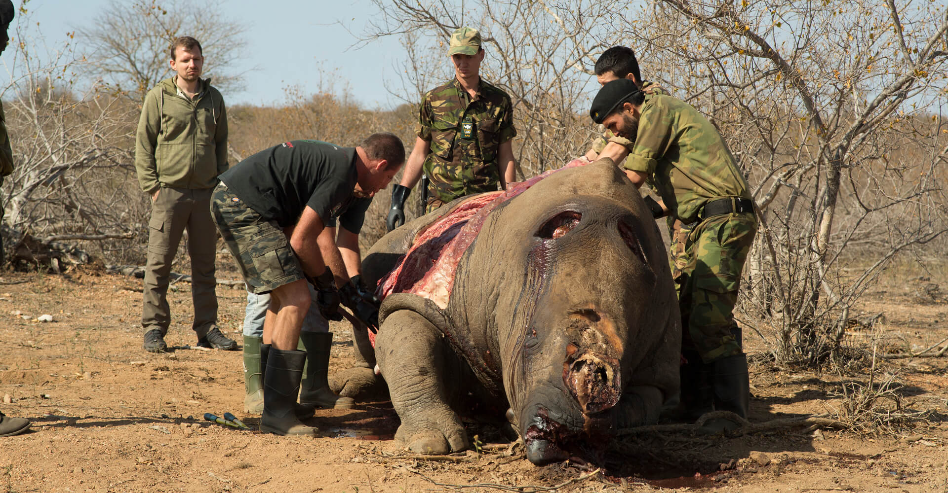 Hemmersbach Rhino Force - Autopsy of a slaughtered rhino